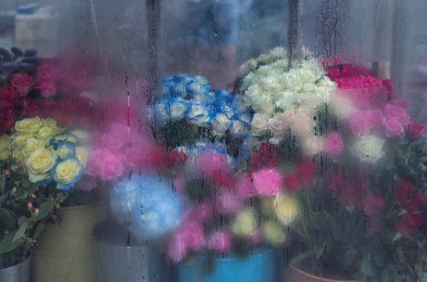 Flower Display, Busan